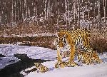 Siberian Winter - Siberian Tiger and cubs by wildlife artist Simon Combes
