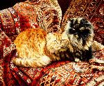 Five Persians - Cats and Rugs by artist Jessica Holm