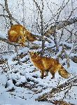 Courtship - Red Foxes by wildlife artist Bonnie Marris
