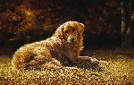 End of the Season - Golden Retriever by artist Bonnie Marris