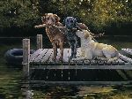 Dog Days - Labrador Retrievers by artist Bonnie Marris