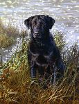 The All American - Black Lab by wildlife artist Bonnie Marris