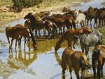 Shallow Water - Horses by artist Tucker Smith