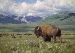 Return of Summer - Bison by artist Tucker Smith