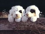 Old English Sheepdog Pups by John Weiss