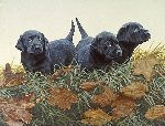 Lab Puppies by John Weiss