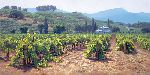 Sonoma Valley Summer by June Carey
