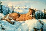Snow King - Cougar by wildlife artist Nancy Glazier