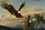 Power Landing - Bald Eagle by wildlife artist Nancy Glazier