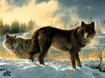 Hearts Afire - Wolves by wildlife artist Nancy Glazier
