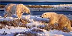 Hudson Heavyweights - Polar Bears by wildlife artist Nancy Glazier