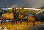 Prelude - Elk by western wildlife artist Nancy Glazier