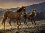 Star and Her Foal by Nancy Glazier