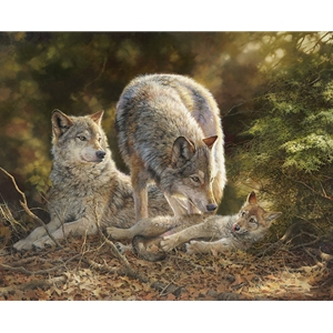 Coyote family finding a moment of rest and relaxation under the cover of the forest.