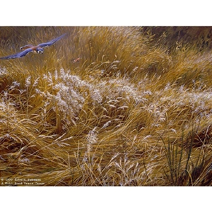 Kestrel and Grasshopper by Robert Bateman