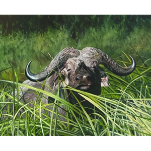 Mbogo Mkuu Cape Buffalo by African wildlife artist Guy Combes