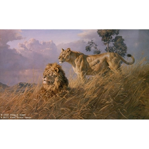 African Evening Lions by wildlife artist Donald Grant
