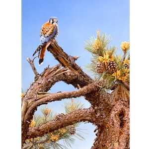Bird's Eye View - Kestrel by artist John Mullane