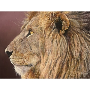 Titan II - lion face off by African wildlife artist Guy Combes