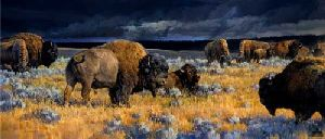 Restless - Bison under stormy skies by western wildlife artist Nancy Glazier